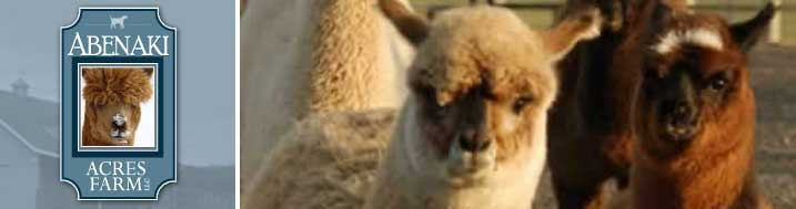 Alpacas in New Jersey. Click on the Events page to see where Abenaki Acres Farm and our Alpacas will appear - farmer's markets, schools, bookstores, and art museums!
