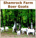 Shamrock Farm Boer Goats, We raise South African Boer goats here in Oklahoma. We started raising Boer goats in the Spring of 2005, as a 4 H project for our son Kaden. Shamrock Farm is located halfway between Tulsa and Stillwater Oklahoma on US 412
