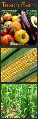 We sell our vegetables direct from the farm and  at two local Farmer's Markets